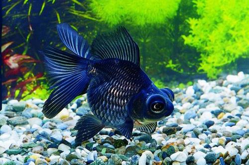 Средство от стресса - красивая рыбка в ухоженном аквариуме дает глазу отдохнуть и снимает